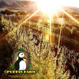 Puffin Farm Outdoor