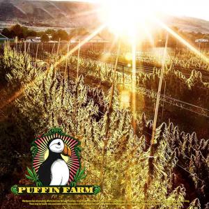 Puffin Farm Outdoor