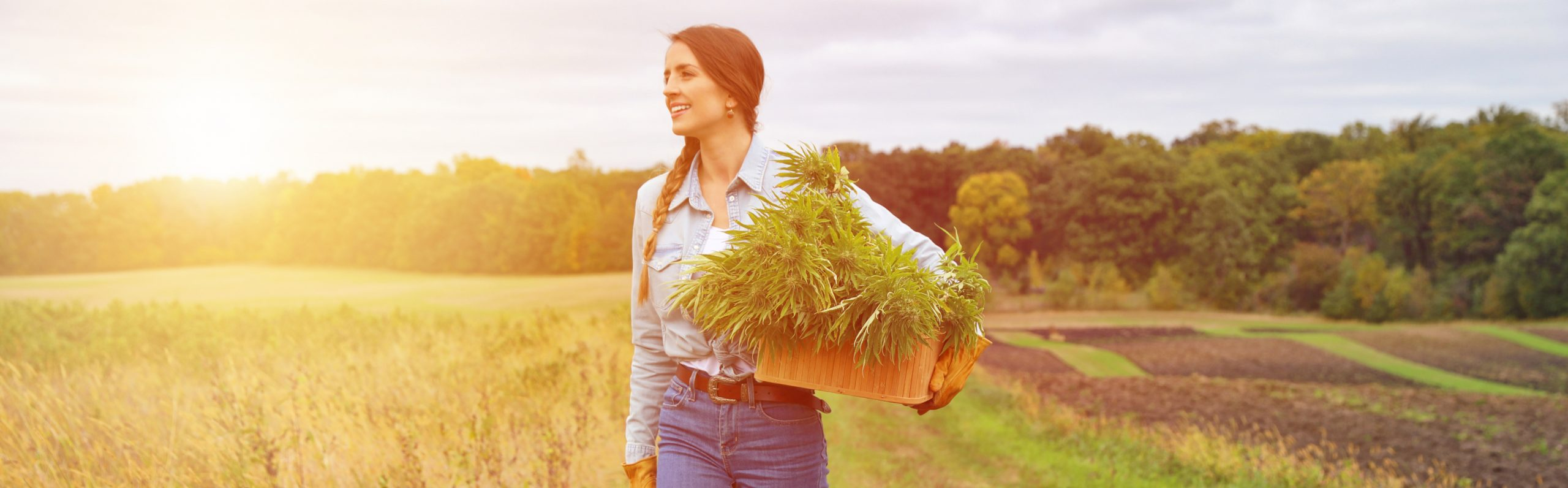 Cannabis Farmer Outdoor